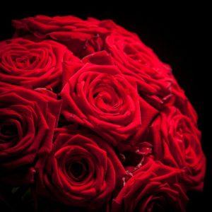Rode Rozen Rood